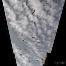 Tim Engelhardt - Phaeton / Silhouettes (fryhide)