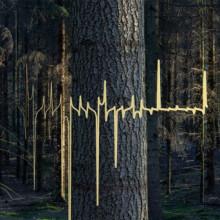 Mollono.Bass - Woods, Tales & Friends (Part Two) (3000 Grad)