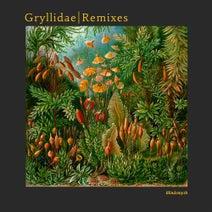 Blindsmyth - Gryllidae Remixes (Connaisseur)
