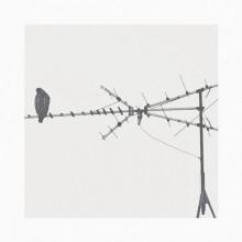 T Raum, Johan Mila - Confused (Crow)