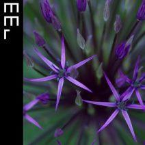 ORDA - Fragments  (Moodmusic)