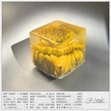 GPU Panic - Flores (Discotexas)